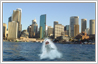 This is a photo editing example in which a normal scene at the Circular Quay in Sydney has been converted to an agressive shark sighting.